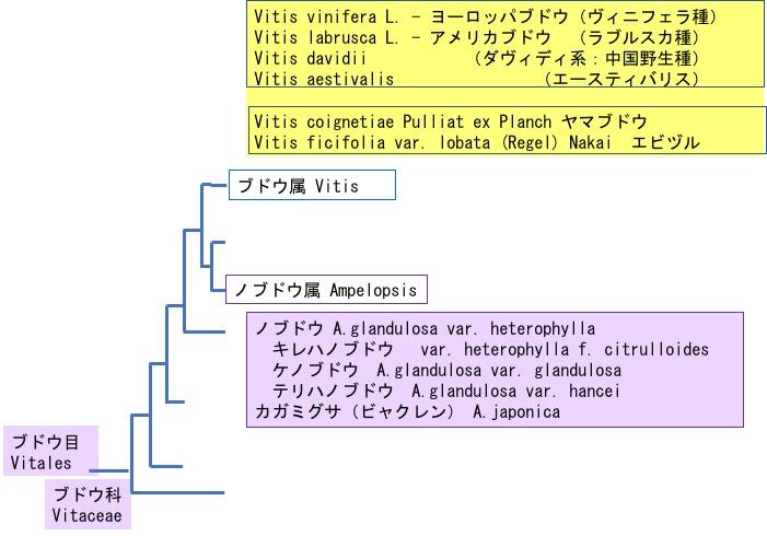 f:id:yachikusakusaki:20181010103036j:plain