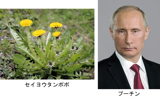 f:id:yachikusakusaki:20181013170804j:plain