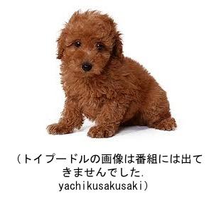 f:id:yachikusakusaki:20181013171236j:plain
