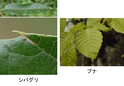 f:id:yachikusakusaki:20181024005618j:plain