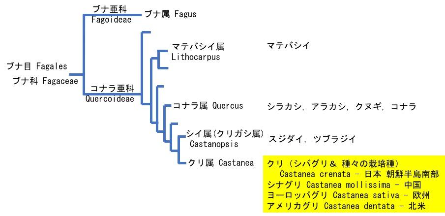 f:id:yachikusakusaki:20181024010257j:plain