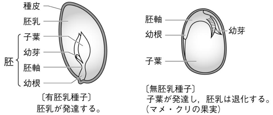 f:id:yachikusakusaki:20181024235155j:plain
