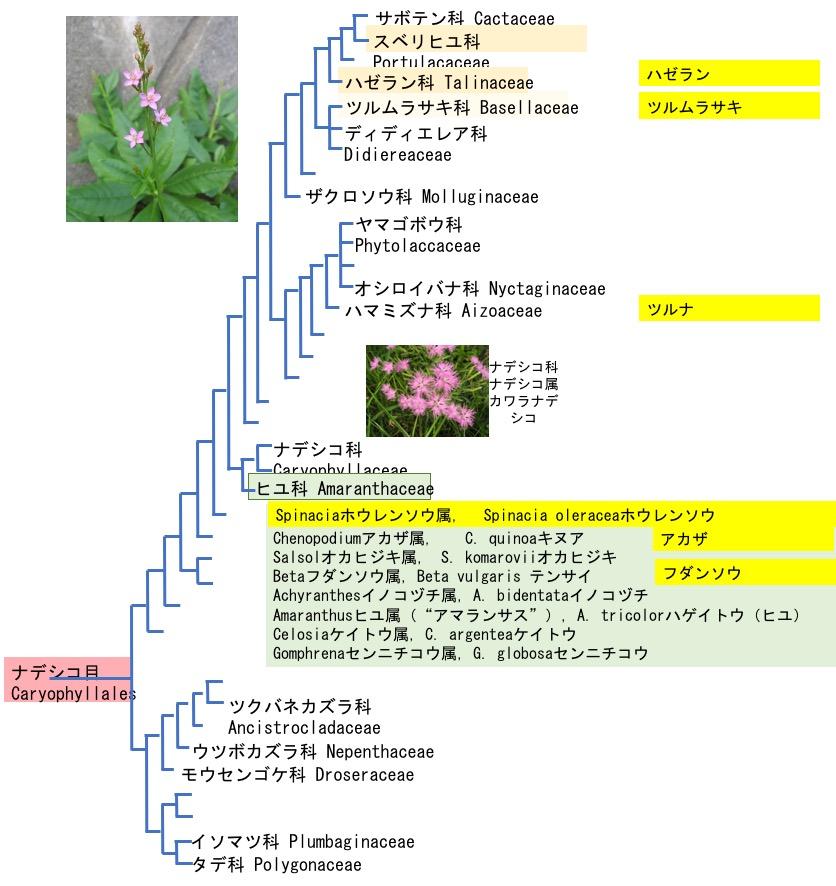 f:id:yachikusakusaki:20181108025646j:plain