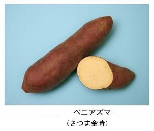 f:id:yachikusakusaki:20181122012339j:plain