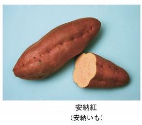 f:id:yachikusakusaki:20181122012600j:plain