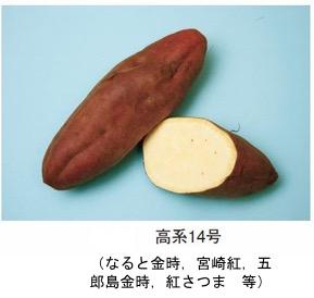 f:id:yachikusakusaki:20181122012654j:plain