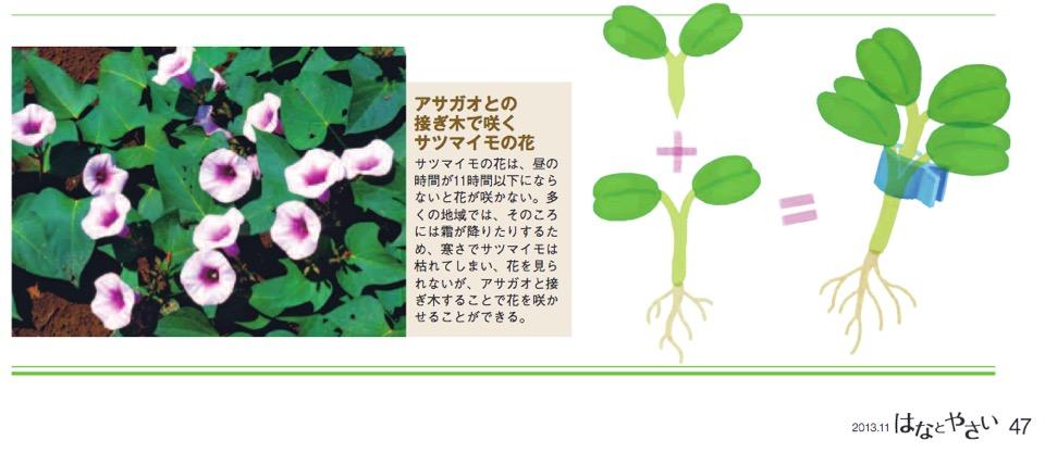 f:id:yachikusakusaki:20181126010203j:plain