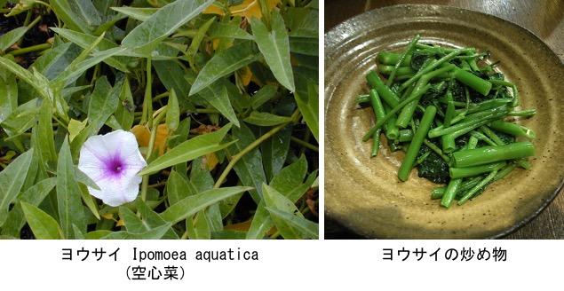 f:id:yachikusakusaki:20181126011021j:plain