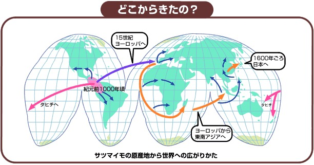 f:id:yachikusakusaki:20181128023534j:plain