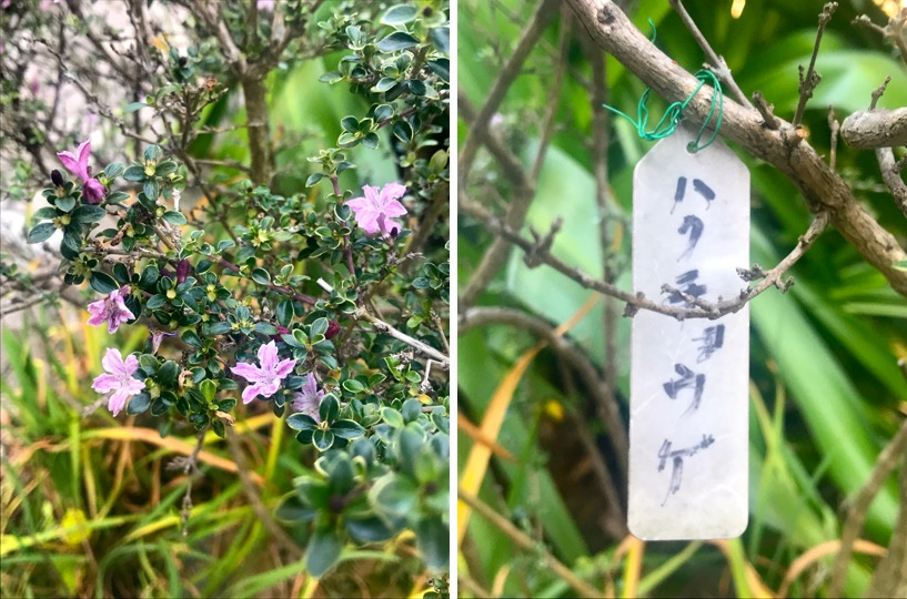 f:id:yachikusakusaki:20181130023144j:plain
