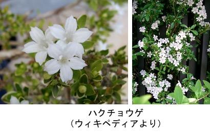 f:id:yachikusakusaki:20181130023619j:plain