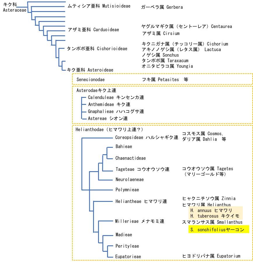 f:id:yachikusakusaki:20181205014346j:plain