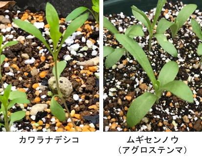 f:id:yachikusakusaki:20181209010527j:plain