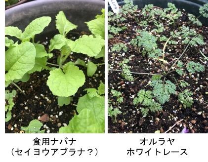 f:id:yachikusakusaki:20181209010543j:plain