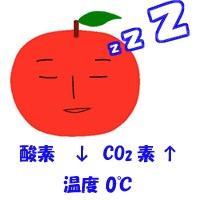 f:id:yachikusakusaki:20181218104322j:plain