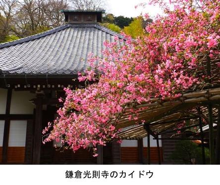 f:id:yachikusakusaki:20181220105630j:plain