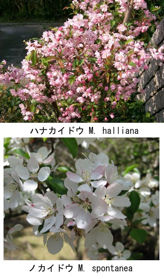 f:id:yachikusakusaki:20181220105811j:plain