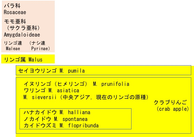 f:id:yachikusakusaki:20181221002453j:plain