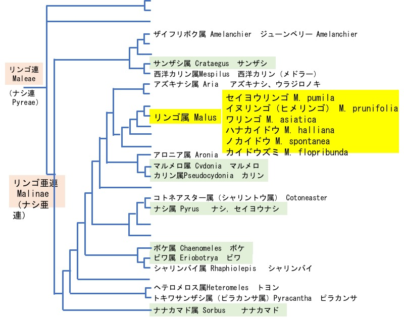 f:id:yachikusakusaki:20181221002713j:plain