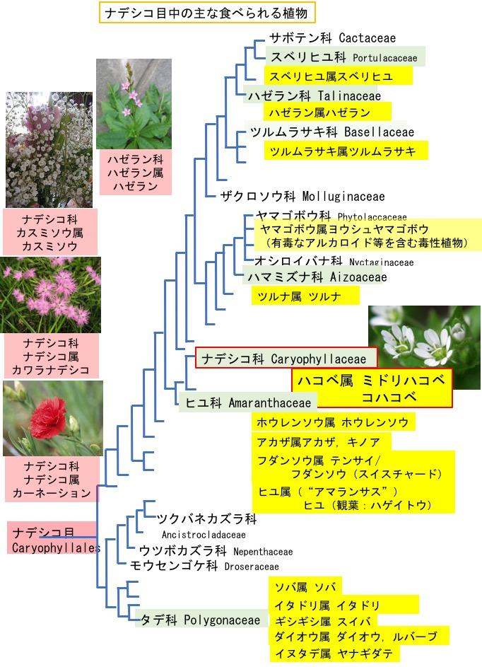 f:id:yachikusakusaki:20190106021649j:plain