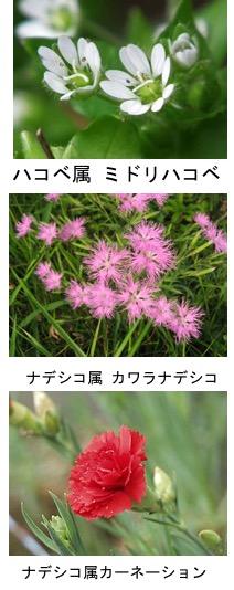 f:id:yachikusakusaki:20190106143831j:plain