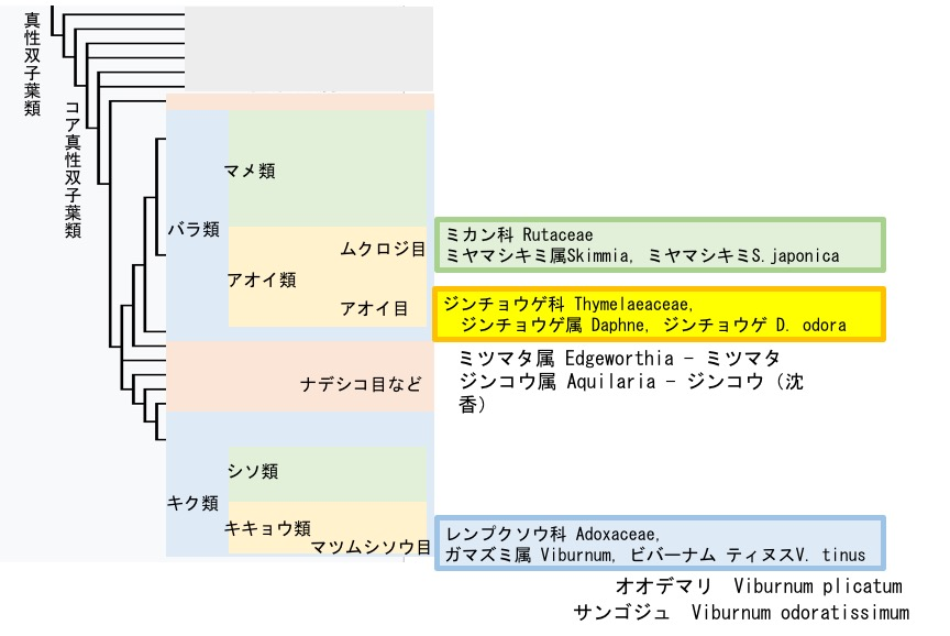 f:id:yachikusakusaki:20190128011830j:plain