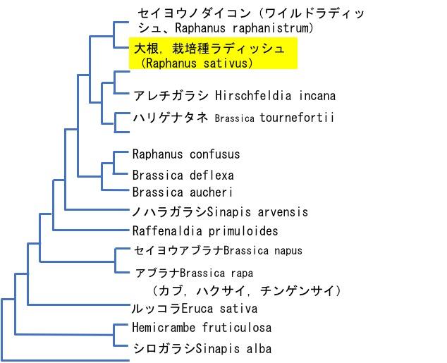 f:id:yachikusakusaki:20190129013002j:plain