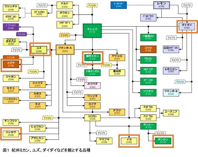 f:id:yachikusakusaki:20190211001850j:plain