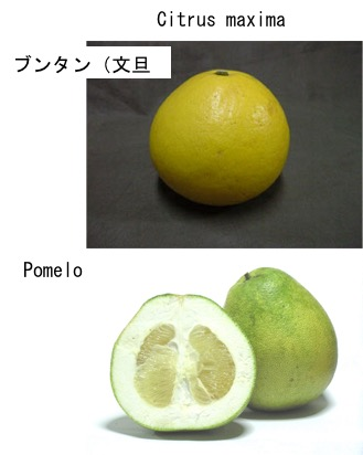 f:id:yachikusakusaki:20190211004035p:plain