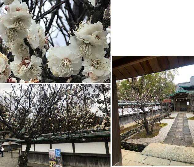 f:id:yachikusakusaki:20190215104654j:plain