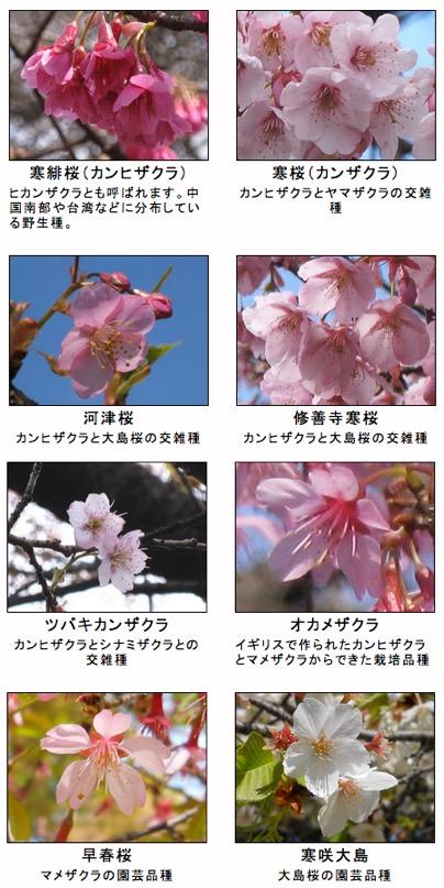 f:id:yachikusakusaki:20190215110107j:plain