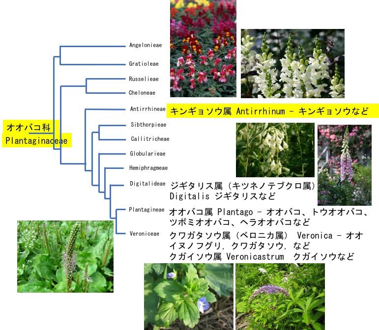 f:id:yachikusakusaki:20190216010316j:plain