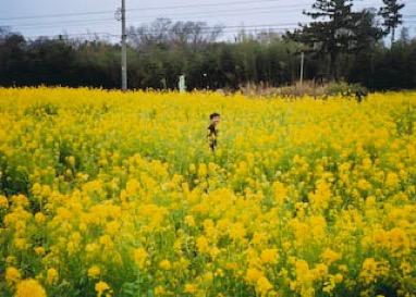 f:id:yachikusakusaki:20190217113750j:plain