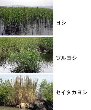 f:id:yachikusakusaki:20190223021847j:plain