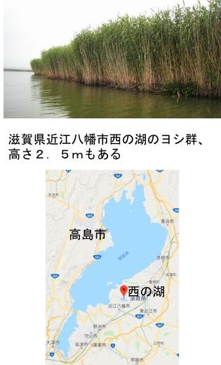 f:id:yachikusakusaki:20190224025602j:plain