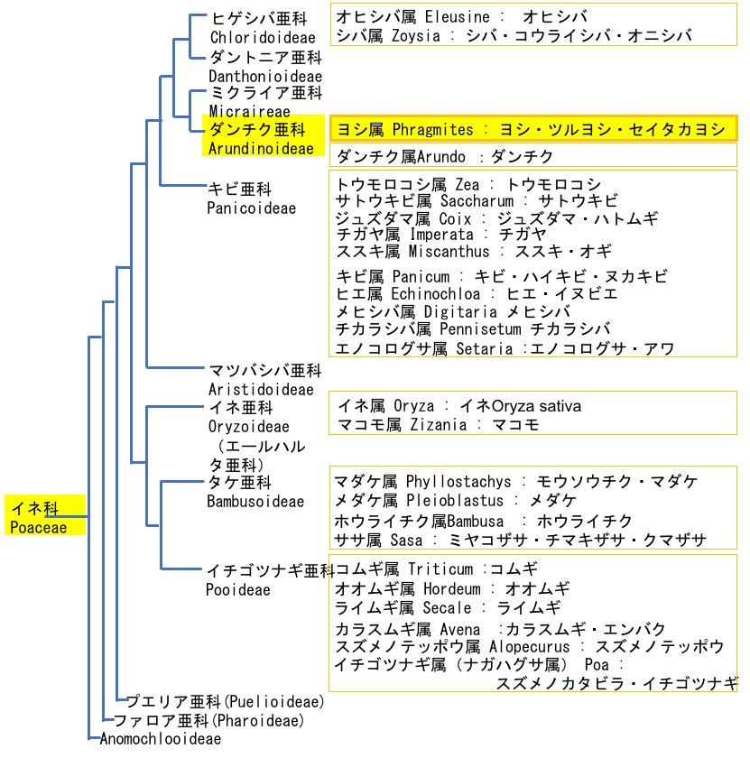 f:id:yachikusakusaki:20190224031026j:plain