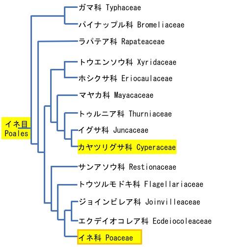 f:id:yachikusakusaki:20190224031122j:plain