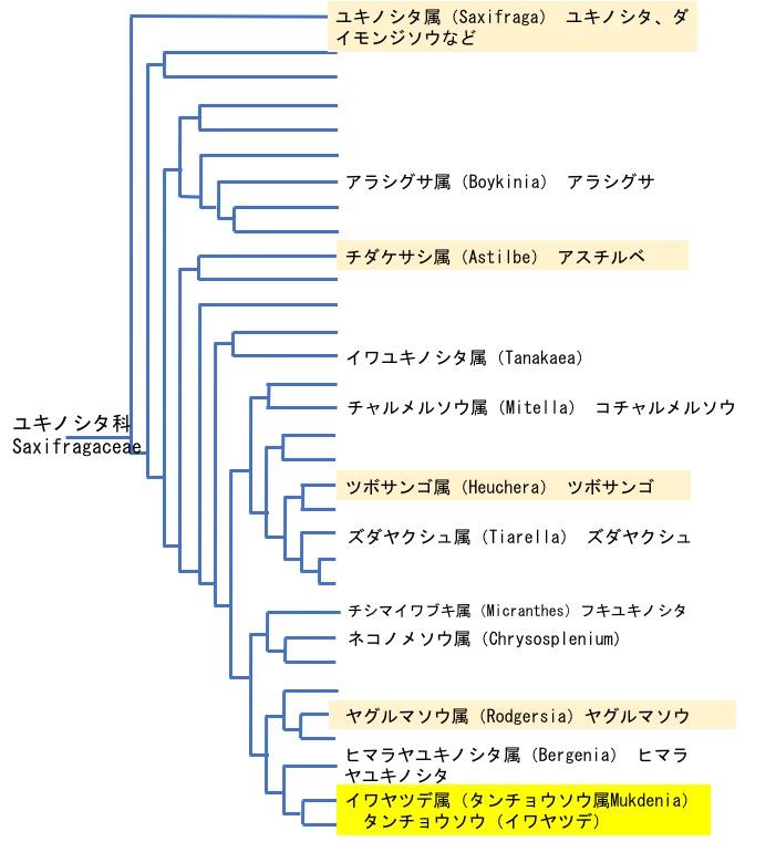 f:id:yachikusakusaki:20190319165126j:plain