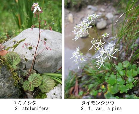 f:id:yachikusakusaki:20190319165417j:plain