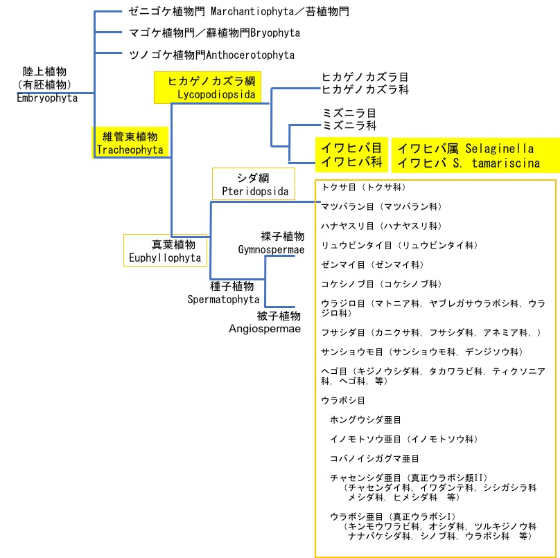 f:id:yachikusakusaki:20190321002930j:plain