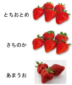 f:id:yachikusakusaki:20190323232124j:plain