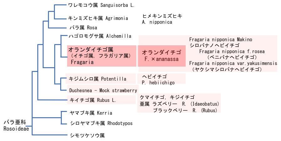 f:id:yachikusakusaki:20190323232513j:plain