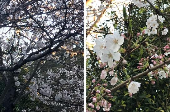 f:id:yachikusakusaki:20190401011333j:plain
