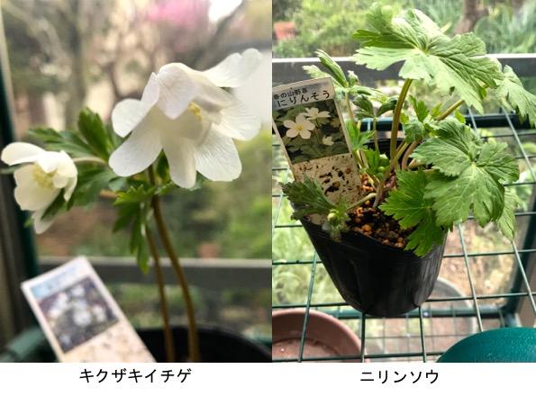 f:id:yachikusakusaki:20190401012208j:plain