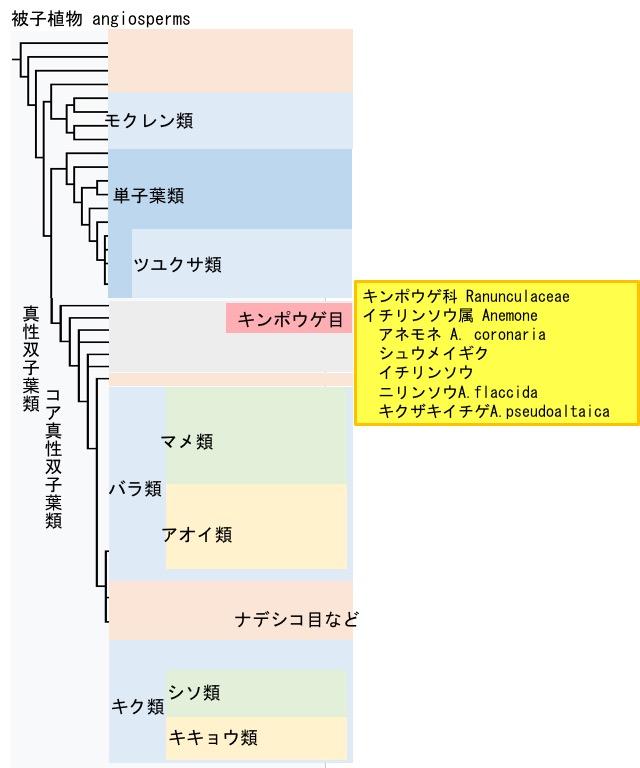 f:id:yachikusakusaki:20190401012916j:plain