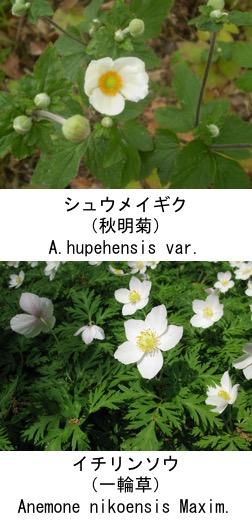 f:id:yachikusakusaki:20190401013246j:plain
