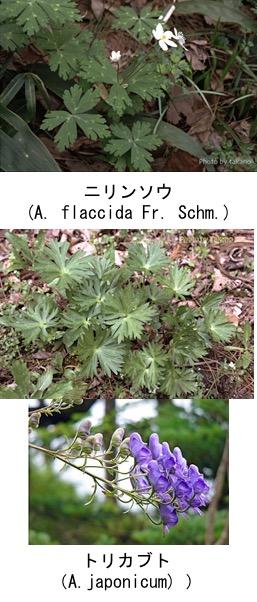 f:id:yachikusakusaki:20190401015237j:plain