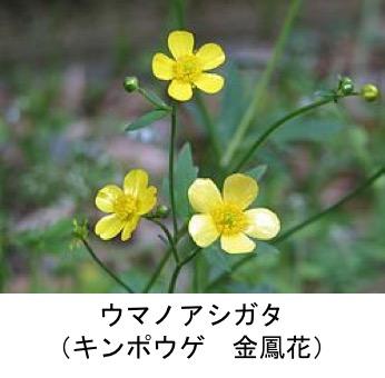 f:id:yachikusakusaki:20190402171058j:plain