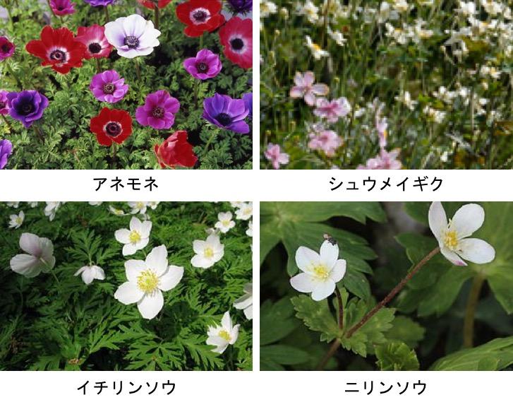 f:id:yachikusakusaki:20190402171946j:plain