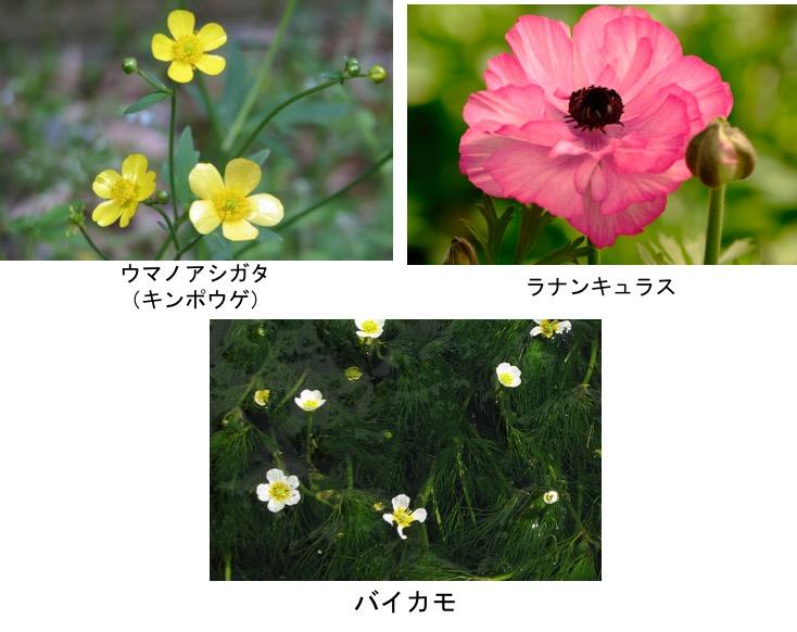 f:id:yachikusakusaki:20190402172020j:plain